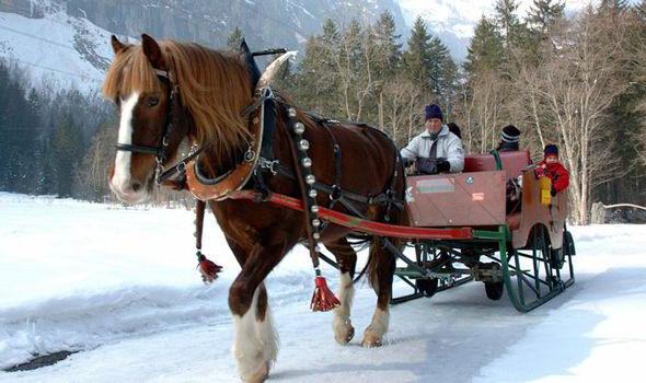 Horse drawn sleigh(2)